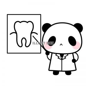パンダ 歯